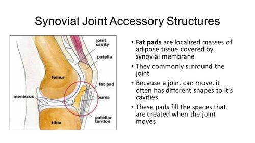 small resolution of synovial joint accessory structures