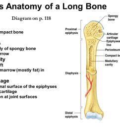 gross anatomy of a long bone [ 1706 x 1066 Pixel ]