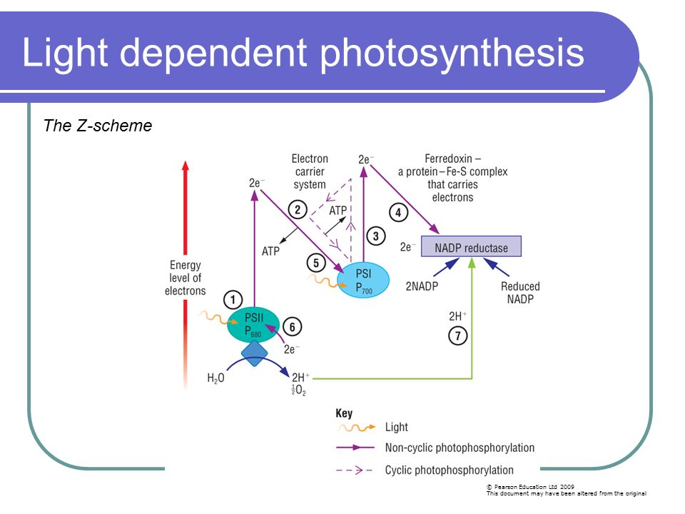 photosynthesis z scheme diagram of moon phases printable mrs martin ppt download light dependent