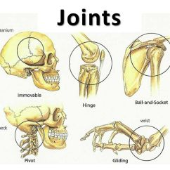 Pivot Joint Diagram Trailer Wiring Diagrams Joints. - Ppt Video Online Download