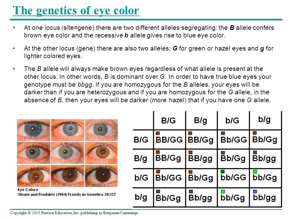 Hazel Eye Color Gene Anexa Market