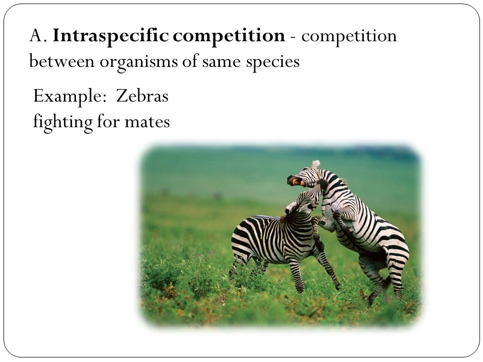 20 1 Species Interactions Cont Ppt Video Online Download