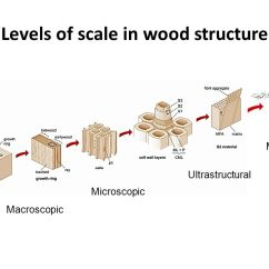 Human Cell Wall Diagram Labeled Plant Root Hair Wood Great Installation Of Wiring Structure And Properties Ppt Video Online Download Rh Slideplayer Com Unlabeled