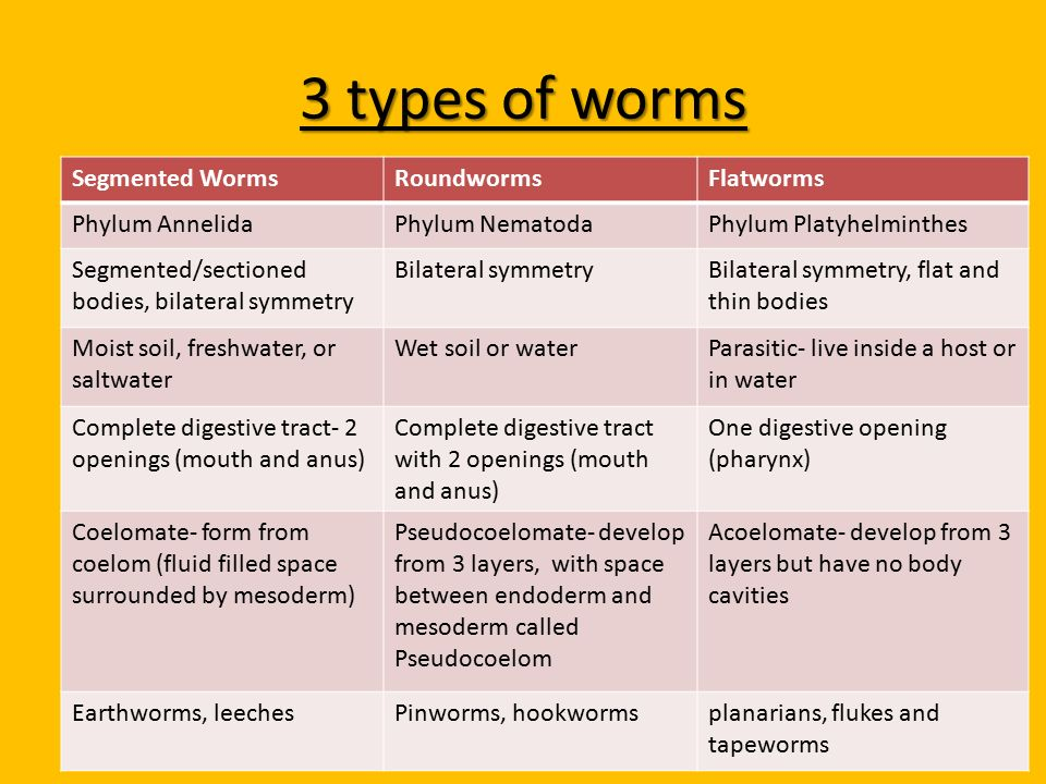 soil layers diagram wiring for 3 phase motor flatworms, roundworms, & segmented worms - ppt video online download