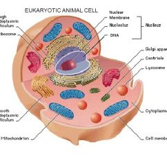 Euglena Cell Diagram With Labels Visual Studio 2013 Labeled Wiring Diagrams Lose Drawing Complete The Structure Function Table Then Label All Eukaryotic