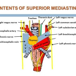 Vagus Nerve Diagram Obd2a Ecu Wiring Dr. Ahmed Fathalla Ibrahim - Ppt Video Online Download