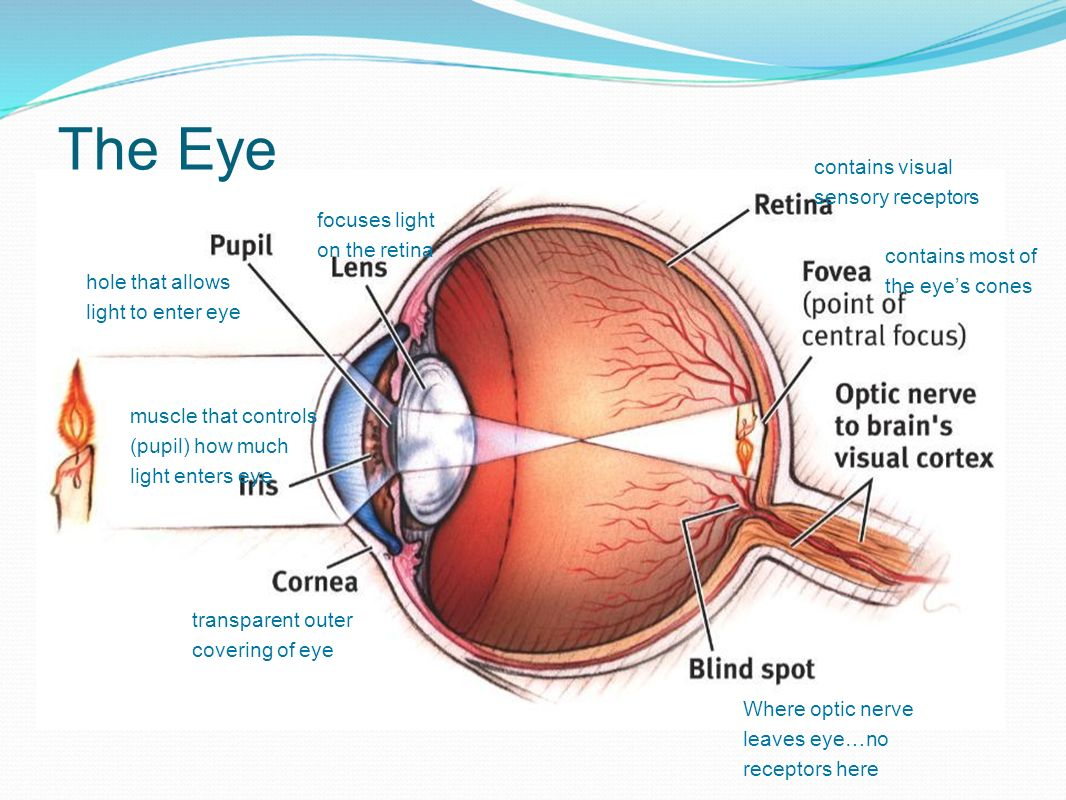 hight resolution of diagram of the eye