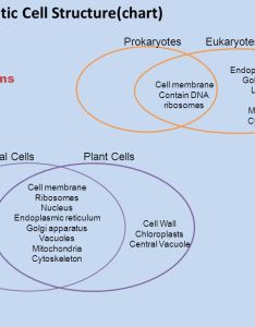 eukaryotic cell structure chart also chapter and function ppt download rh slideplayer