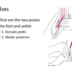 Foot Pulses Diagram H22a Wiring Harness Ankle Lower Leg Anatomy Ppt Video Online Download 12