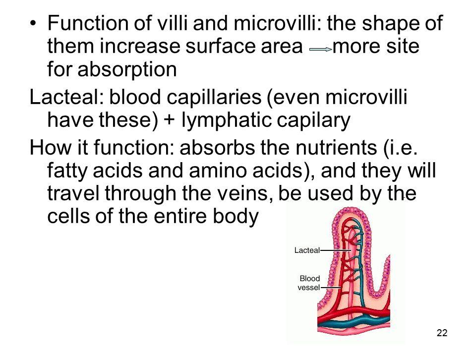fatty acids function