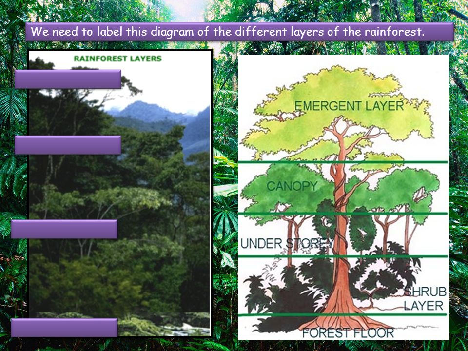 amazon rainforest layers diagram what part of speech is lo 1 to use atlases and globes find the location main we need label this different
