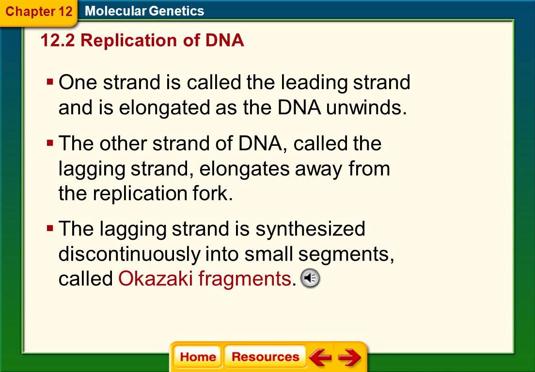 Dna Strand Replication Worksheet