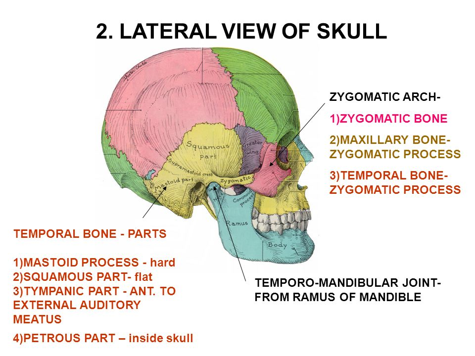 inside skull diagram wiring for phone jack i calvarium cap consists of bones linked by sutures ppt lateral view zygomatic arch 1 bone