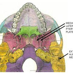 Inside Skull Diagram Cat5 Wiring 568b I. Calvarium = Cap- Consists Of Bones Linked By Sutures - Ppt Video Online Download