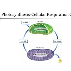 Photosynthesis And Cellular Respiration Cycle Diagram 2000 Hyundai Elantra Engine Chapter 7 Ppt Video Online Download 4