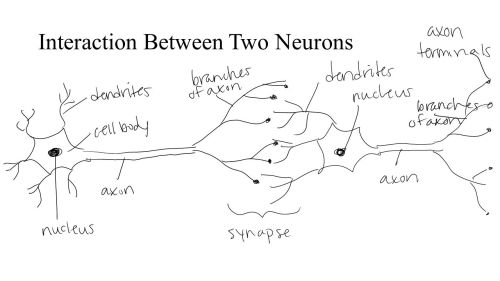 small resolution of neuron diagram blank