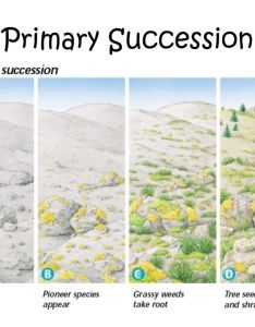 primary succession also warm up complete the following venn diagram in your composition book rh slideplayer