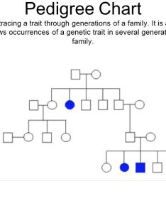 pedigree also chart  tool for tracing trait through generations of rh slideplayer