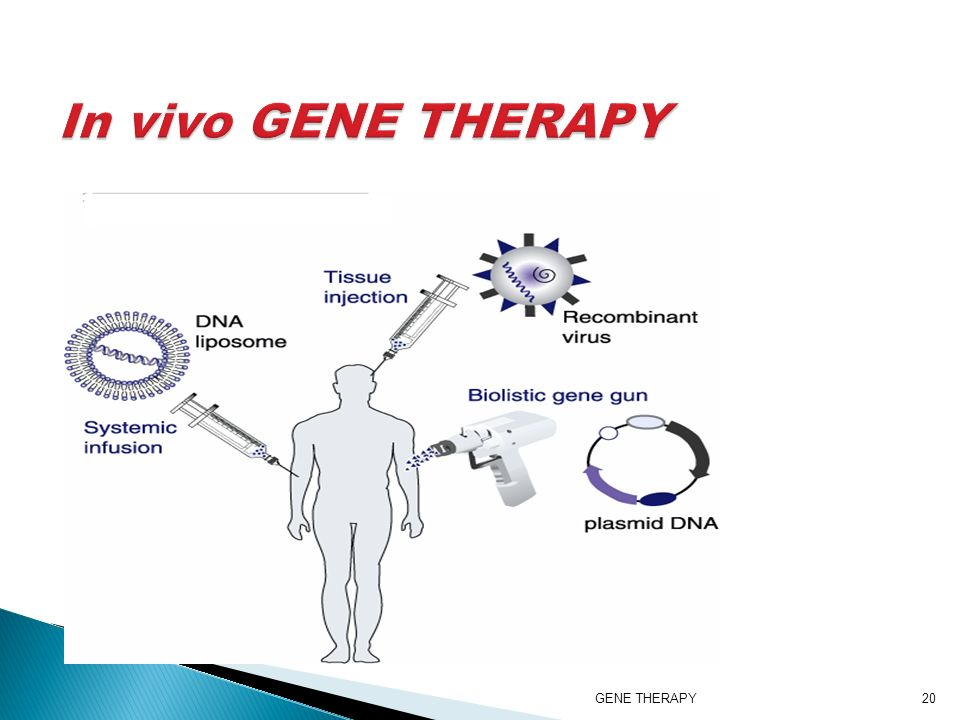 in vivo gene therapy diagram simple wiring for fog lights d of pg studies ppt video online download 20