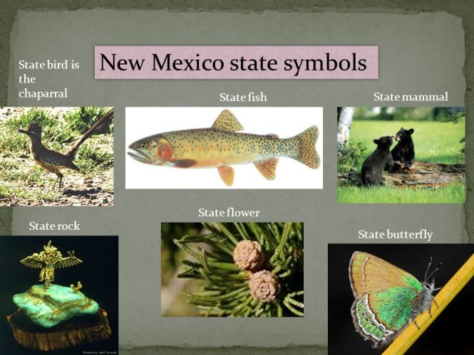 New Mexico State Fish The Best Fish 2018