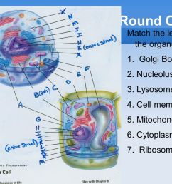 round one match the letter to the organelle 1 golgi body 2 nucleolus [ 1058 x 793 Pixel ]