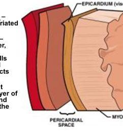 3 myocardium involuntary  [ 1280 x 720 Pixel ]