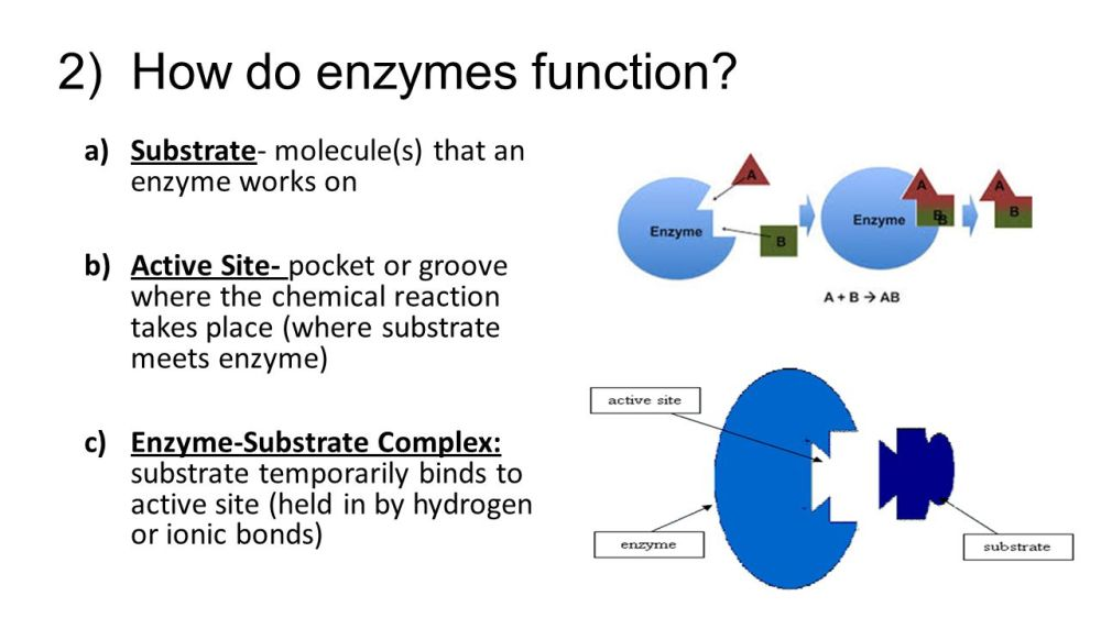 medium resolution of 2 how do enzymes function