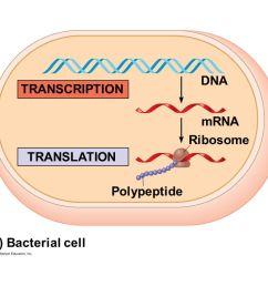 9 dna transcription mrna ribosome translation polypeptide [ 1280 x 720 Pixel ]