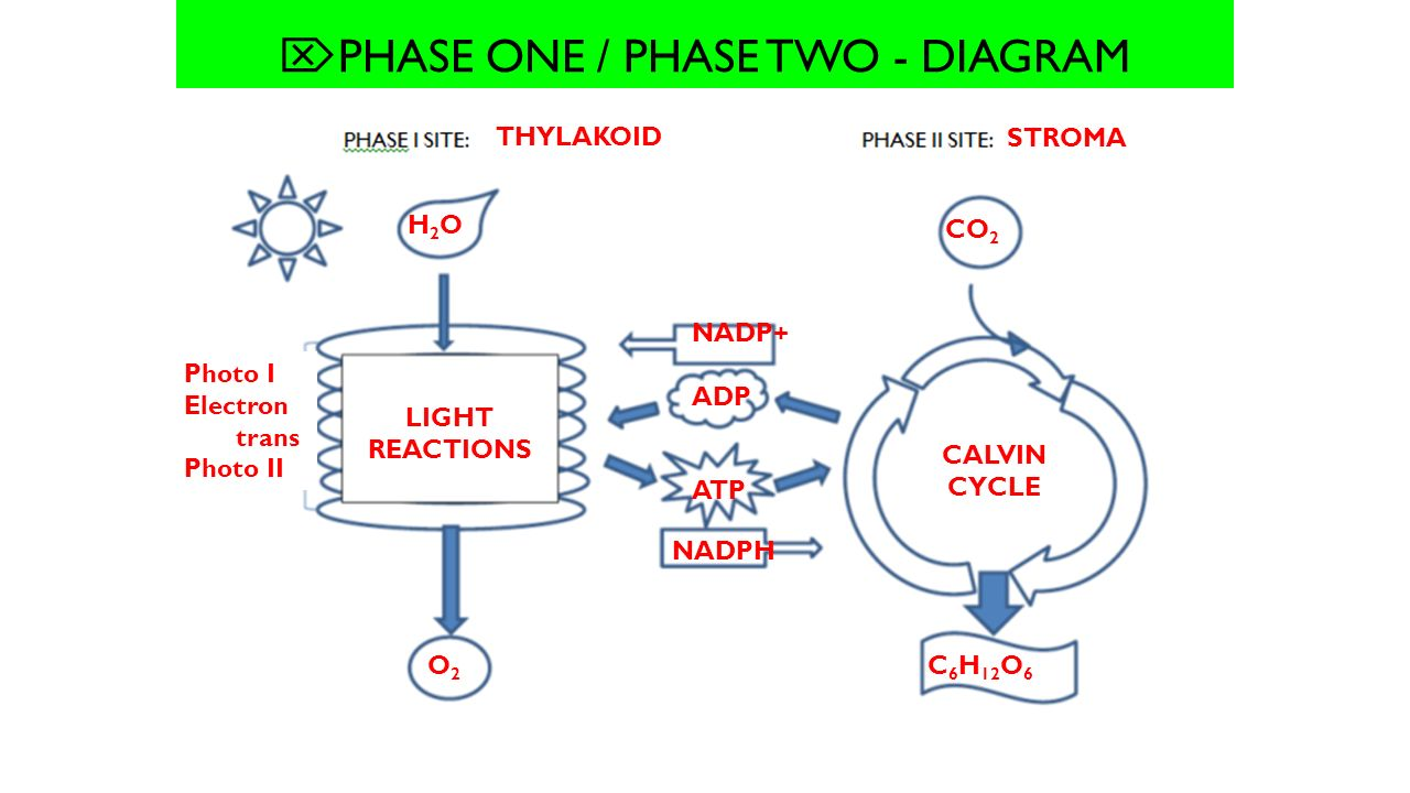 hight resolution of  phase one phase two diagram
