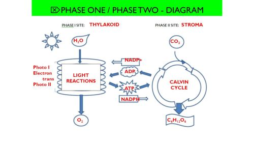 small resolution of  phase one phase two diagram