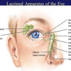 Vascular Anatomy Diagram Lower Sets In Maths Venn Diagrams External Of The Eye - Ppt Video Online Download