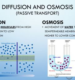 Diffusion and osmosis 7th grade Life Science. - ppt video online download [ 720 x 1280 Pixel ]