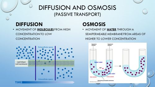 small resolution of Diffusion and osmosis 7th grade Life Science. - ppt video online download