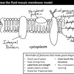 Diagram Of Fluid Mosaic Model Cell Membrane Leviton 3 Way Motion Sensor Switch Wiring Structure 1 Ppt Video Online Download S1 Draw The