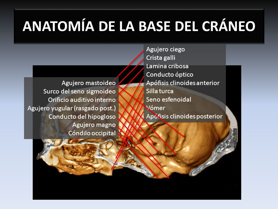 ANATOMA DE LA BASE DEL CRNEO  ppt video online descargar