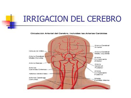 Aspectos bsicos de la vascularizacin cerebral normal