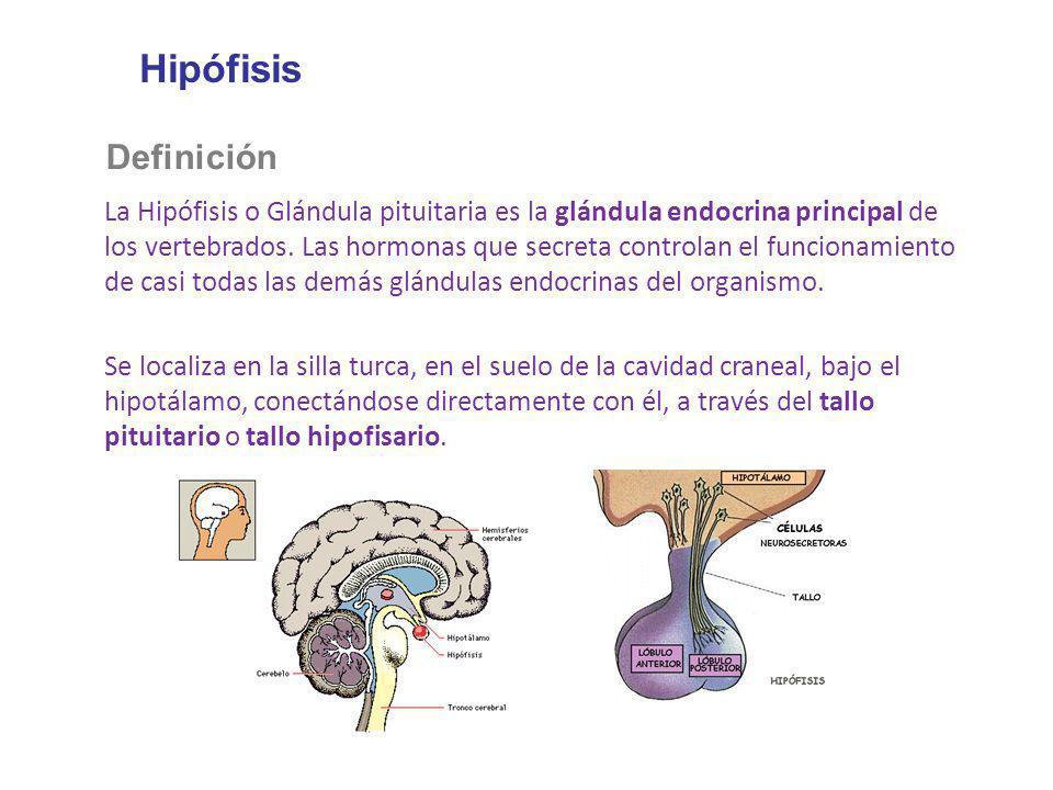 Clase N 10 Concepto de hormona  ppt descargar