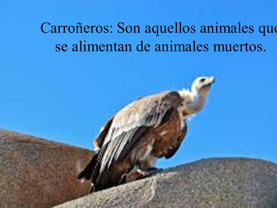 La Alimentacin De Los Animales  ppt video online descargar