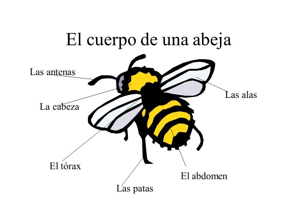 El Cuerpo De Una Abeja Las Antenas Las Alas La Cabeza El