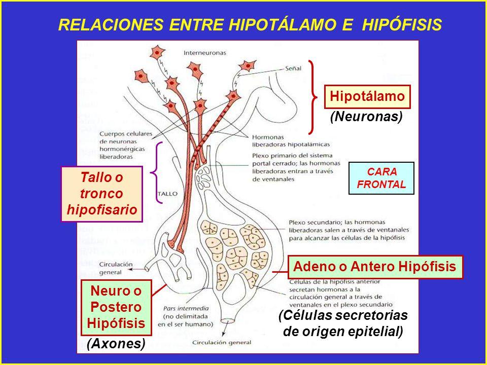 DE CONTROL de la Funcin Reproductiva de la Hembra  ppt