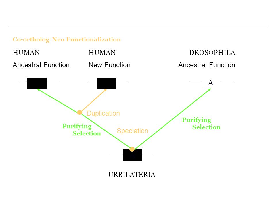 The use of the concepts of evolutionary biology in genome