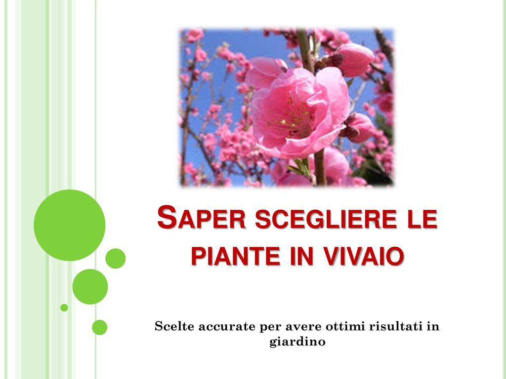 Saper Scegliere Le Piante In Vivaio  Ppt Video Online