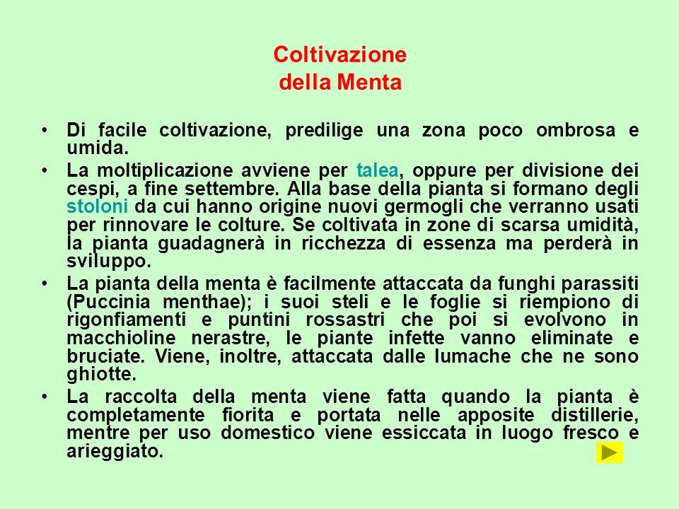 Descrizione della pianta Classificazione scientifica  ppt scaricare