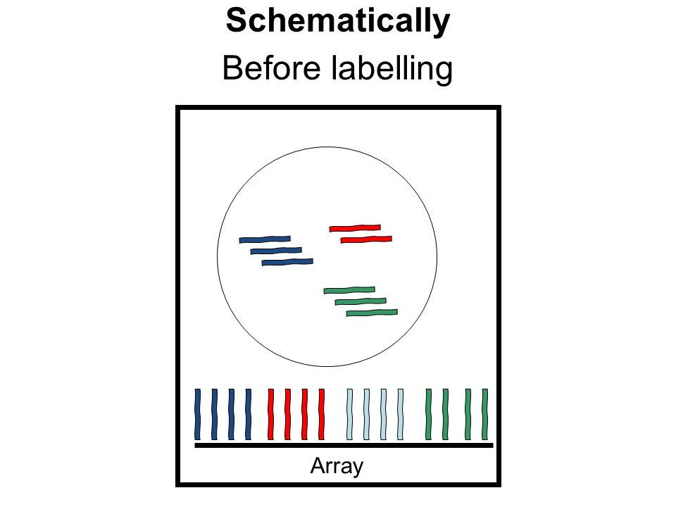 I differenti tipi cellulari di un organismo multicellulare