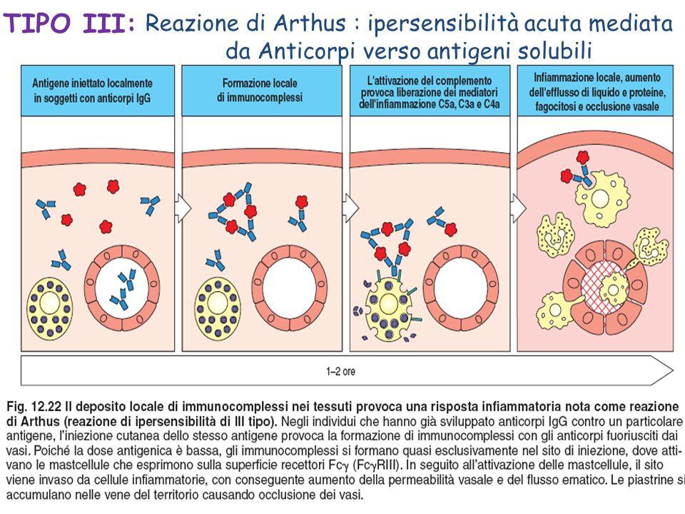 Risultati immagini per reazione ipersensibilità