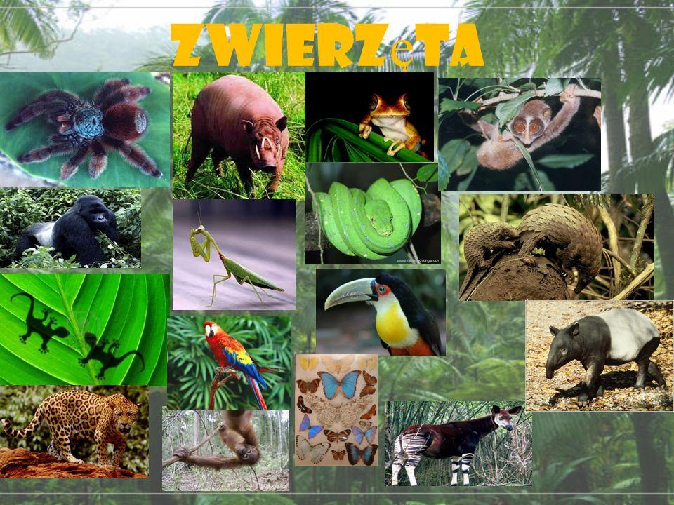Tropikalne Lasy deszczowe  ppt video online pobierz