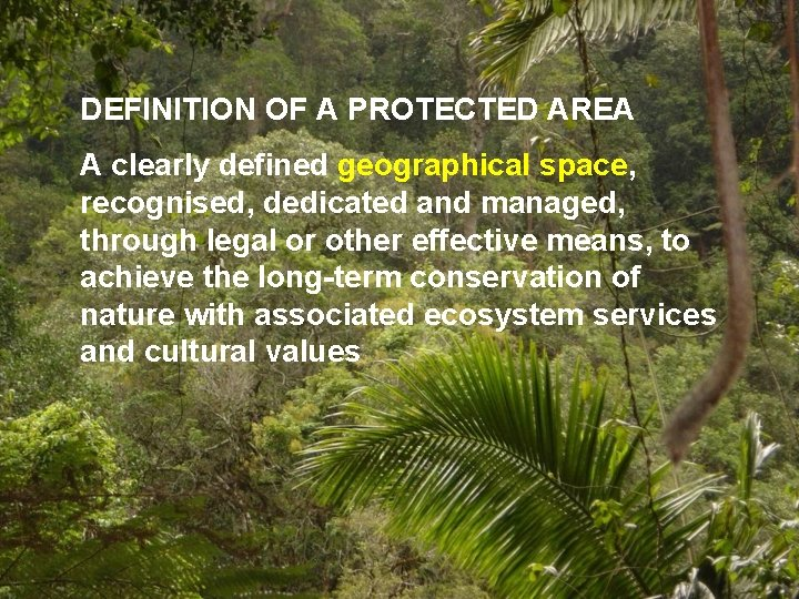 Find out the ecological difference between woods and forests with this guide. Making Sense Of Protected Areas The Role Of