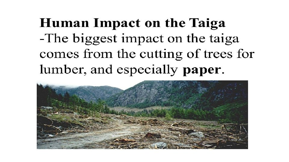 The main trophic levels in the taiga biome food chain are producers, primary consumers, secondary consumers, tertiary consumers and decomposers. Taiga Biome Submitted By Ayesha Tanveer Samra Ijaz