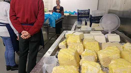 Cheeses sitting - not sure at what stage