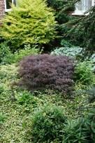 Yew Tree Farm, Gosberton, Lincs; garden of Rob & Claire Bailey-Scott
